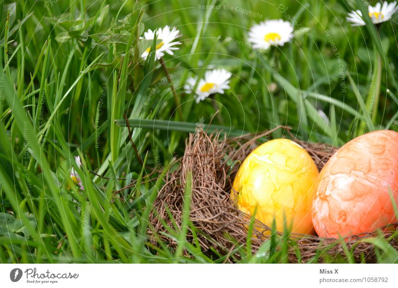 In the grass Food Nutrition Garden Easter Spring Grass Blossom Meadow Multicoloured Yellow Easter egg nest Nest Daisy Hiding place Hide Find Search 2 Egg