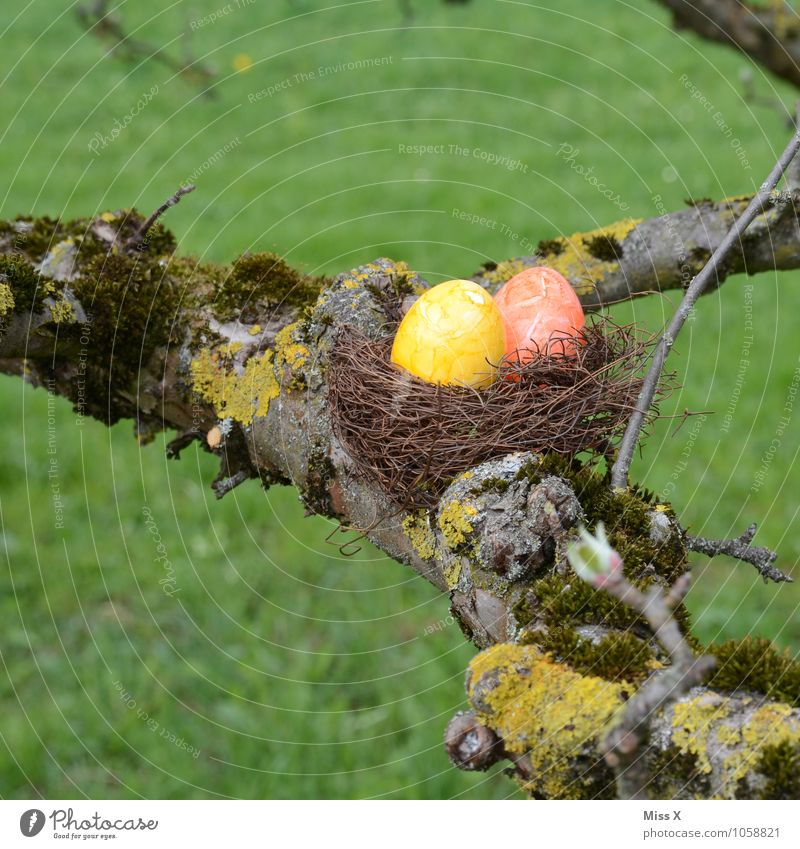 Nature Colour Tree Meadow Spring Garden Food Nutrition Branch Easter Search Twig Moss Egg Find Nest