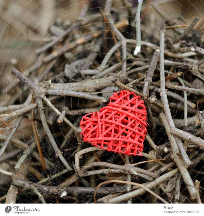 Red on brown Decoration Bushes Kitsch Odds and ends Wood Heart Emotions Moody Love Infatuation Romance Branch Twigs and branches Hide Display of affection