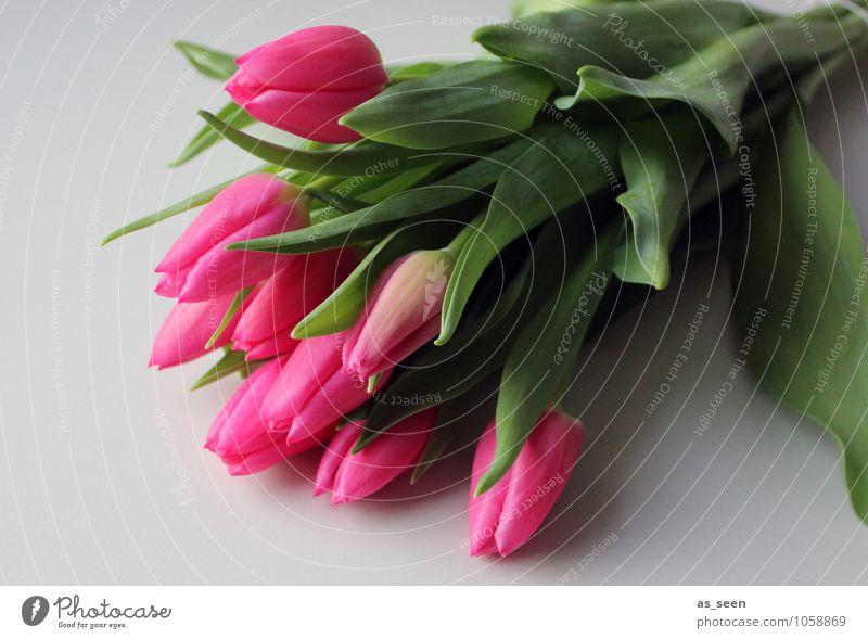 Plant Green Colour Flower Leaf Life Spring Blossom Feasts & Celebrations Garden Pink Lifestyle Lie Illuminate Design Fresh