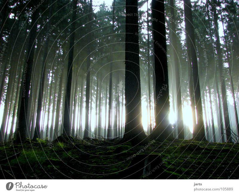 Tree Sun Forest Autumn Graffiti Fear Fog Beginning Panic Dazzle UFO Awareness Beam of light