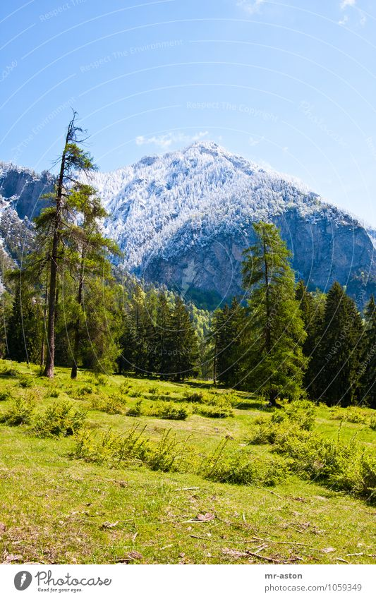Kalter Frühling Vacation & Travel Tourism Trip Adventure Nature Landscape Plant Spring Beautiful weather Snow Tree Grass Bushes Wild plant Mountain
