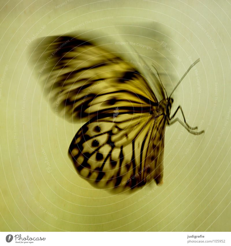 Nature Beautiful Animal Movement Legs Flying Wing Insect Butterfly Dynamics Feeler Judder