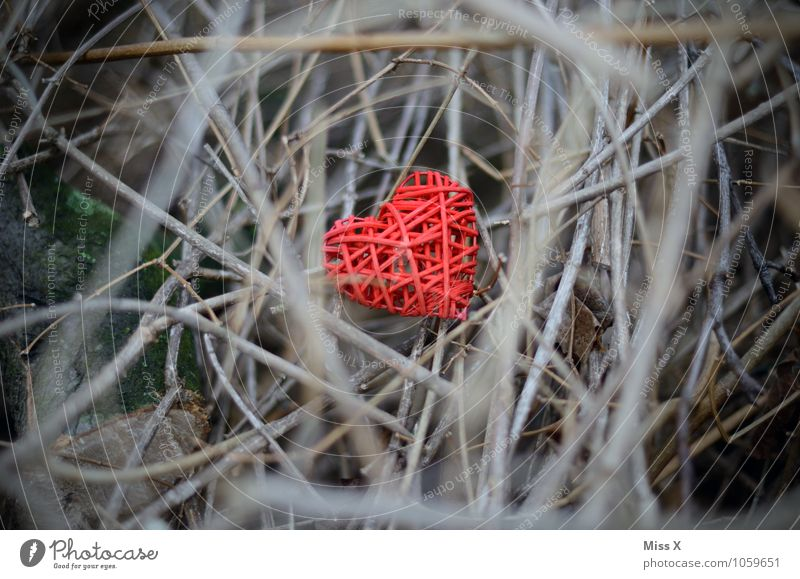 Heart hidden Valentine's Day Plant Bushes Emotions Moody Love Infatuation Lovesickness Love affair Hidden Branch Twig Muddled Plaited Hide Mysterious
