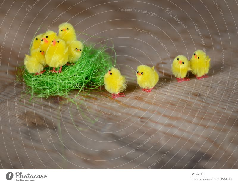 Off to the nest Easter Bird Group of animals Baby animal Small Cute Emotions Moody Safety Protection Safety (feeling of) Friendship Together Team Teamwork