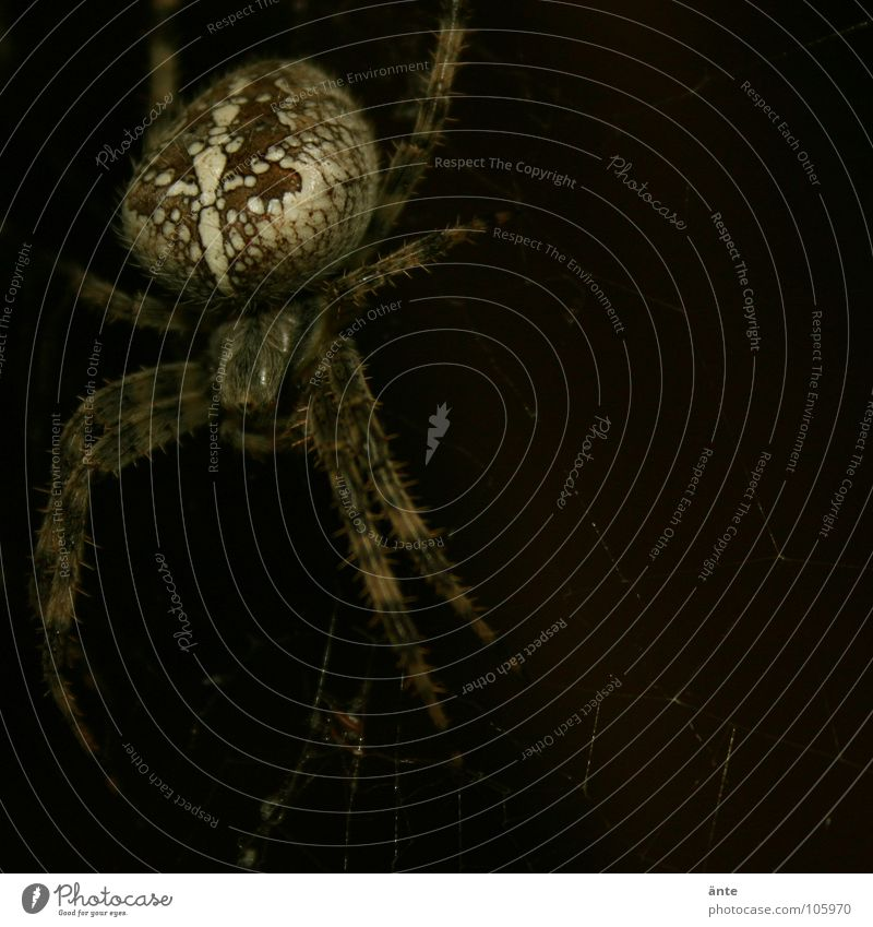 Fear Dangerous Insect Disgust Panic Spider Hazard-free Test of courage Cross spider