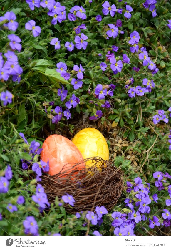 Searched and found Food Nutrition Garden Easter Spring Beautiful weather Flower Blossom Multicoloured Easter egg nest Egg Hen's egg Colour Nest Find