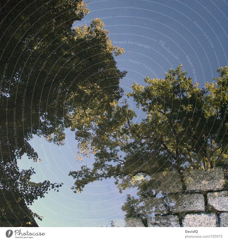 Water Sky Tree Green Blue Leaf Street Garden Lanes & trails Park Cobblestones Beautiful weather Surrealism Puddle