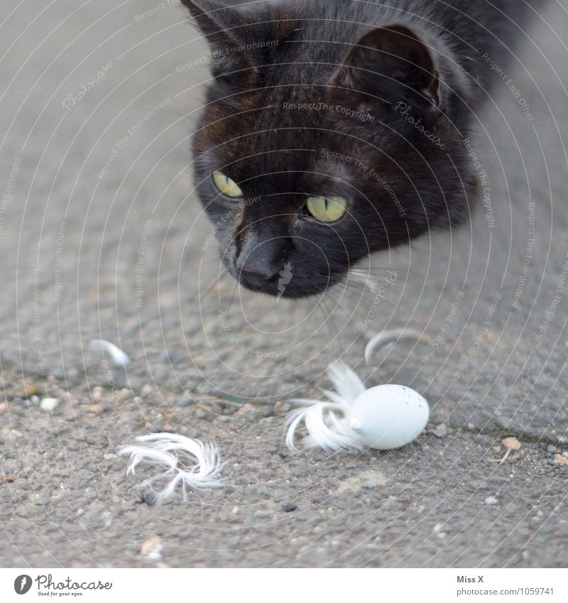 search for clues Pet Cat Bird Baby animal To feed Emotions Moody Interest Appetite Fear of death Dangerous Voracious Bird's egg Feather Cat's head Colour photo