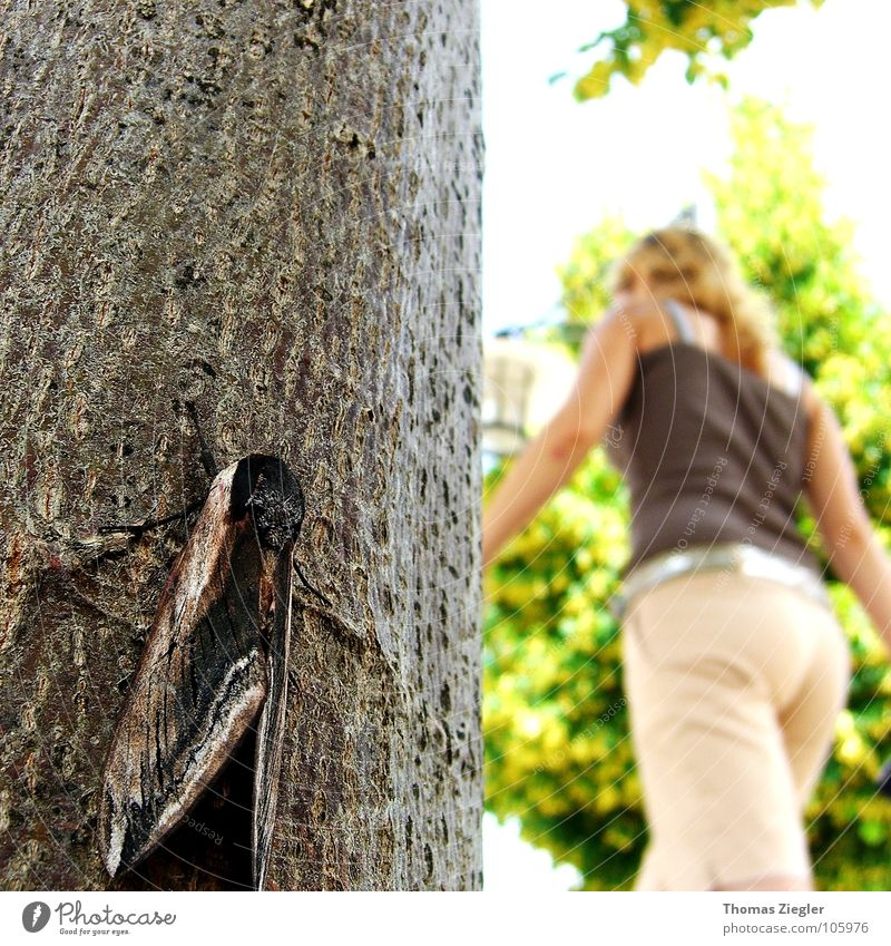 Tree Summer Dark Graffiti Bright Mysterious Butterfly Audience Difference