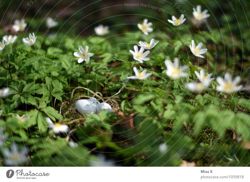 Nest in the bush (anemone) Easter Environment Nature Animal Spring Flower Blossom Meadow Bird Baby animal Small Easter egg nest Eyrie Bird's egg Hide Woodground