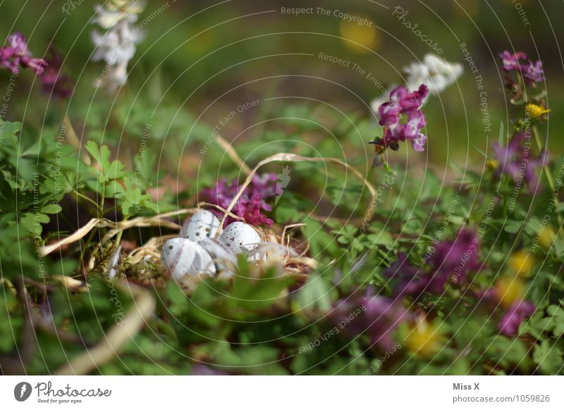 Easter nest Environment Nature Animal Spring Flower Grass Blossom Meadow Pigeon Baby animal Lie Small Spring day Easter egg nest Eyrie Nest Egg Bird's egg