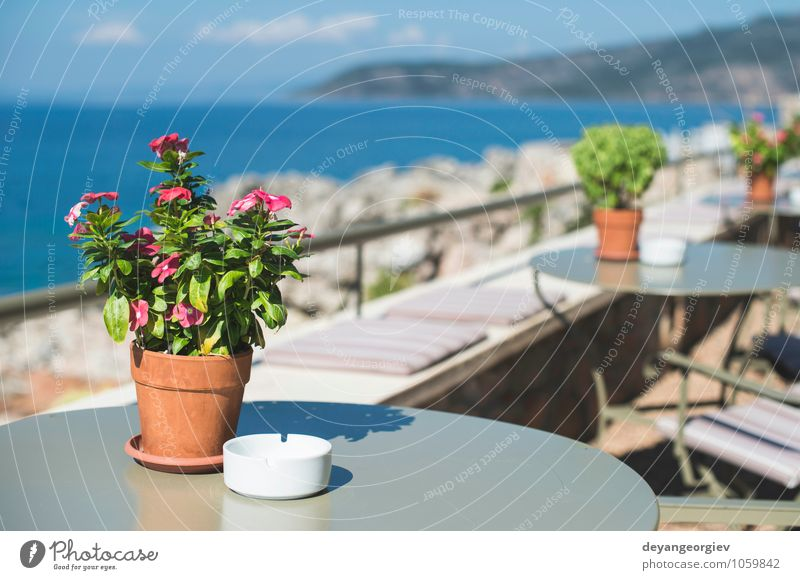 Typical greek restaurant. Coffee Vacation & Travel Tourism Summer Beach Ocean Island House (Residential Structure) Chair Table Restaurant Flower Building
