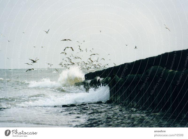 seagull group Seagull Bird Wangerooge Ocean Surf North Sea