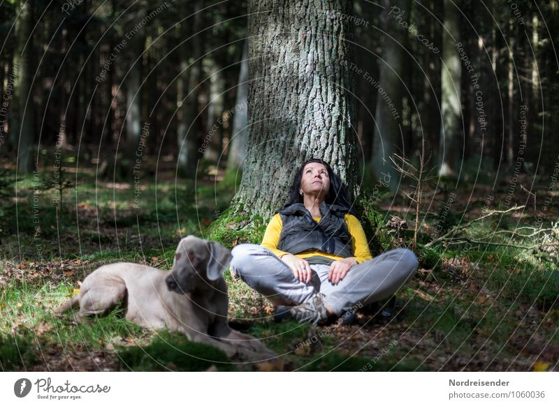 Dog Human being Woman Nature Tree Relaxation Calm Animal Forest Adults Feminine Think Lifestyle Friendship Idyll Free