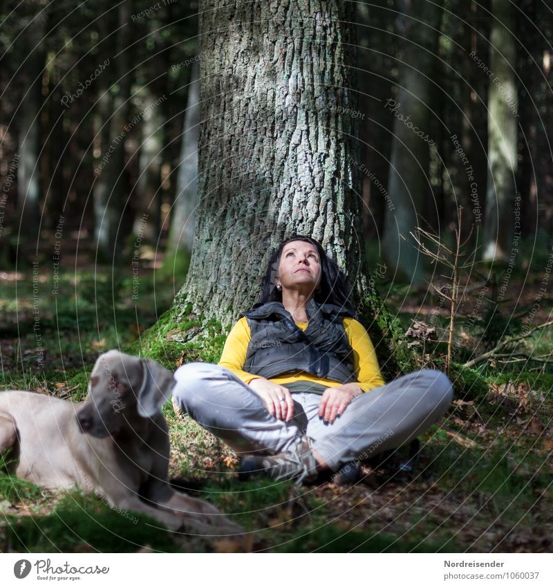Human being Woman Dog Nature Tree Relaxation Landscape Animal Forest Adults Feminine Dream Leisure and hobbies Hiking Observe Friendliness