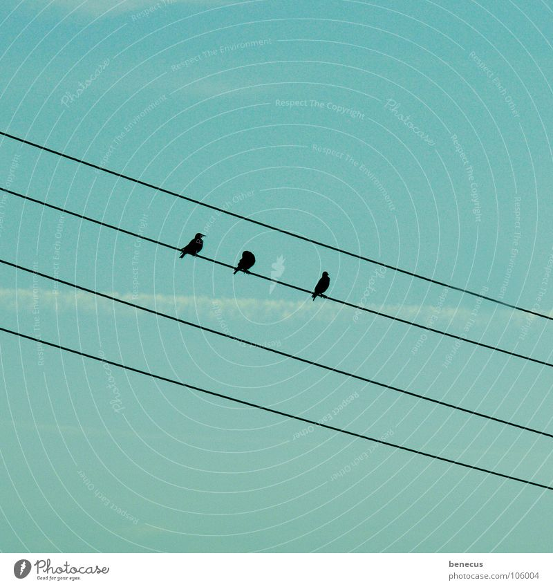 Triplets on board Bird Electricity High voltage power line Diagonal Crouch 3 4 Turquoise Vapor trail Autumn Collection Flock of birds Migratory bird Ornithology