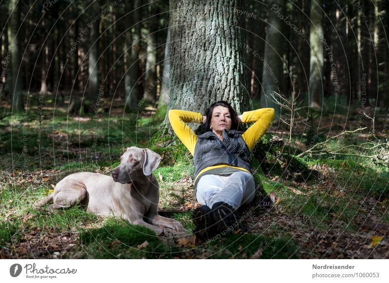 In thought..... Harmonious Senses Relaxation Calm Hiking Human being Feminine Woman Adults Life Earth Tree Forest Lanes & trails Animal Dog Observe Lie Sit