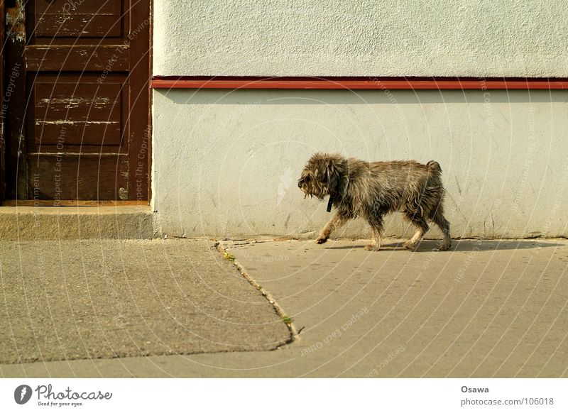 House (Residential Structure) Street Wall (building) Dog Door Transience Entrance Traffic infrastructure Mammal