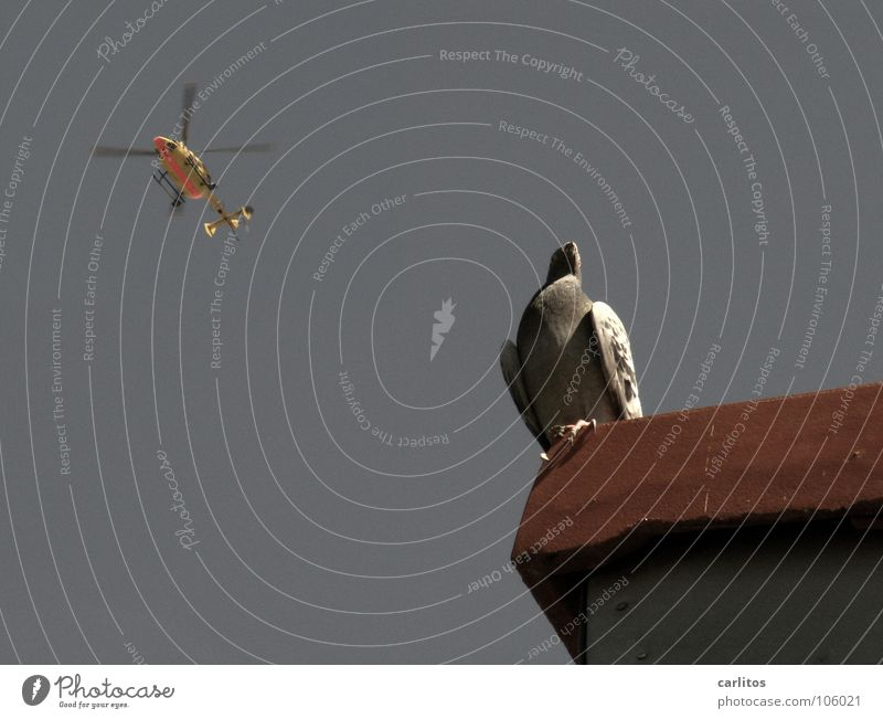 landing approach Helicopter Pigeon Roof Roofing tile Bird's-eye view Summer Help air rescue hear something first Review