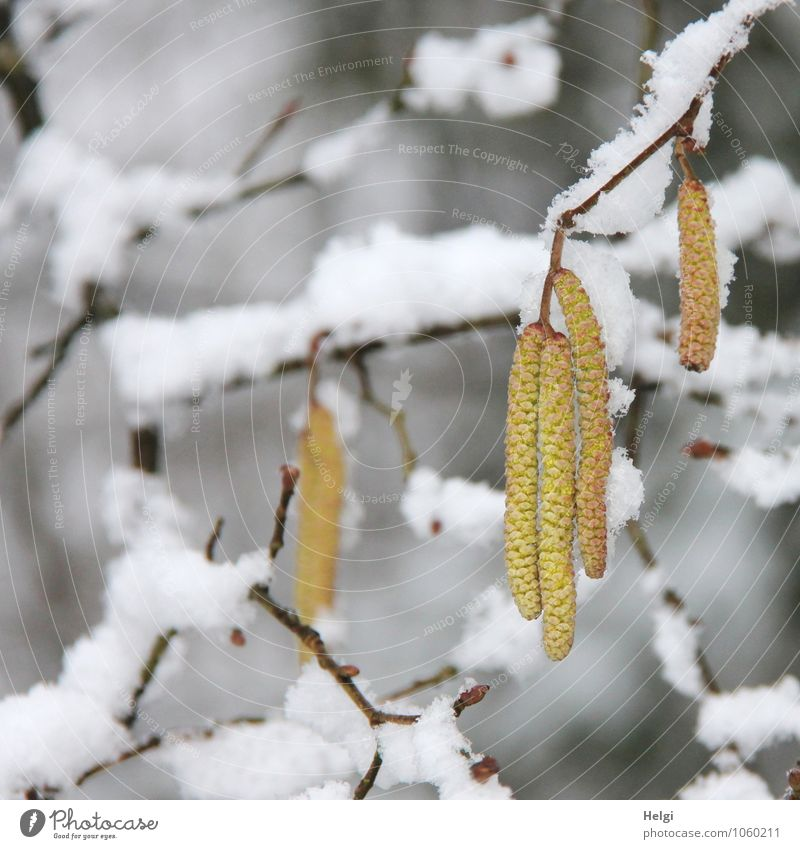 Nature Plant White Calm Winter Forest Cold Environment Yellow Life Snow Blossom Natural Exceptional Brown Growth