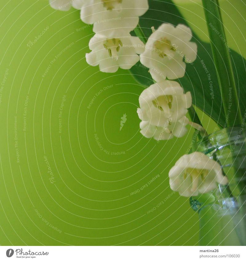 White Flower Green Jump Blossom Spring Glass Fresh Decoration Delicate Stalk Blossoming Fragrance Bouquet Bottle Vase