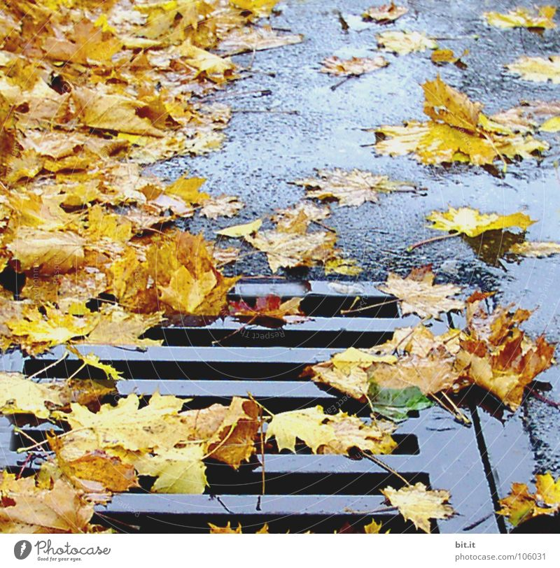 Winter Leaf Far-off places Autumn Cold Snow Lanes & trails Brown Ice Frost Sidewalk Stalk Services Repeating Sunbathing Doomed