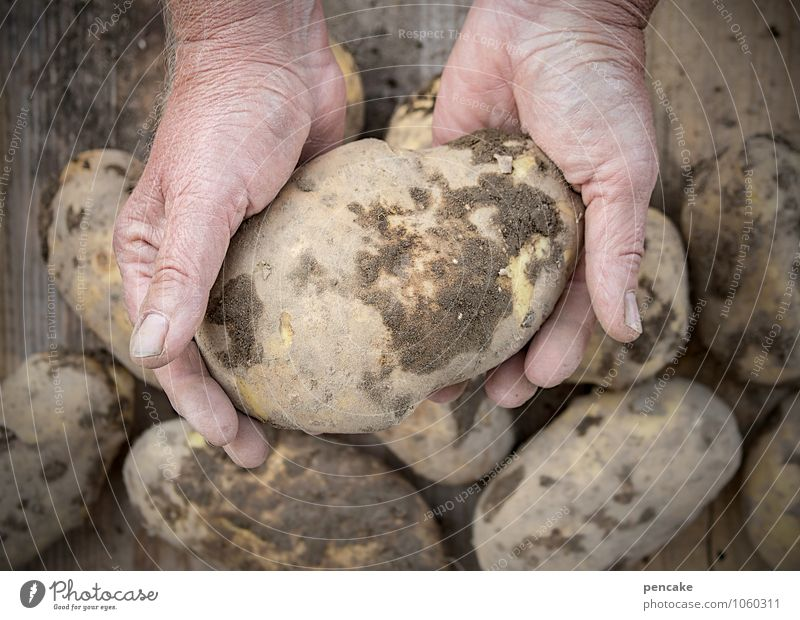 potato eaters, of course! Food Vegetable Organic produce Vegetarian diet Adults Hand Fingers 45 - 60 years Work and employment Observe Healthy Potatoes Harvest