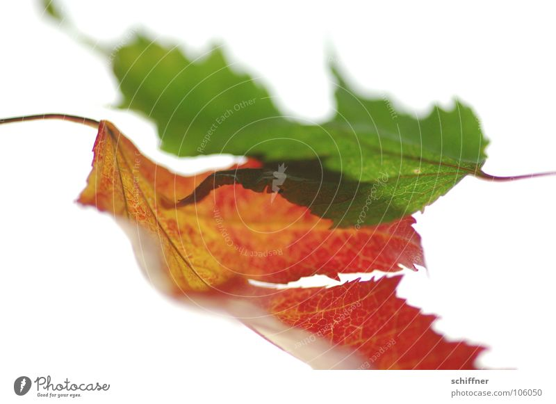 Green Red Leaf Autumn Together Row Autumnal Indian Summer