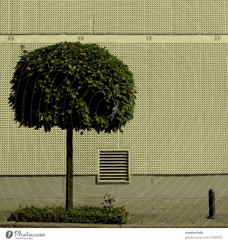 Nature City Tree Wall (building) Freedom Gray Wall (barrier) Line Arrangement Empty Gloomy Mask Clarity Sidewalk Border