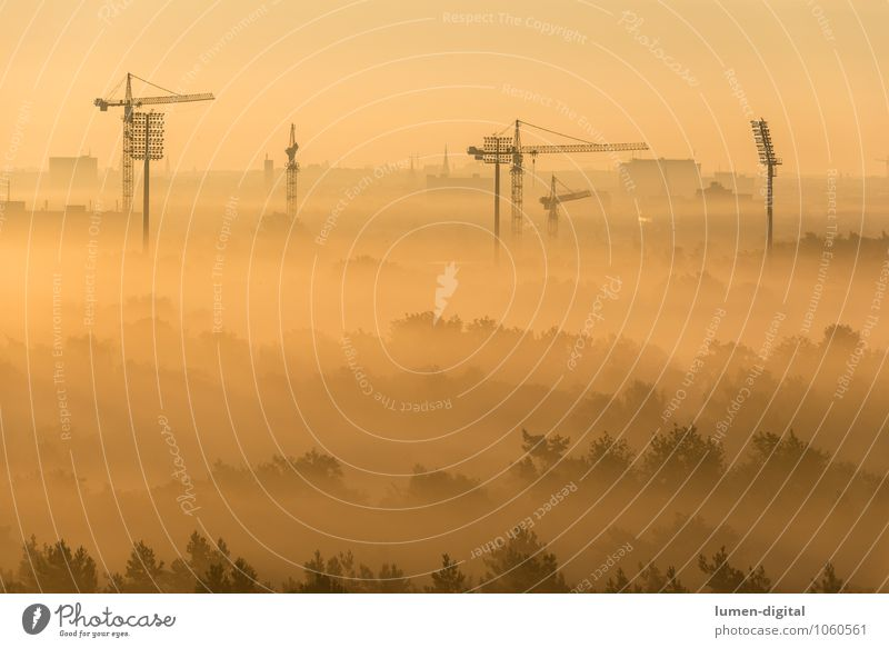 Construction cranes in Berlin in the morning light Construction site Nature Fog Tree Forest Town Capital city Skyline Build Modern Yellow Gold Moody Crane