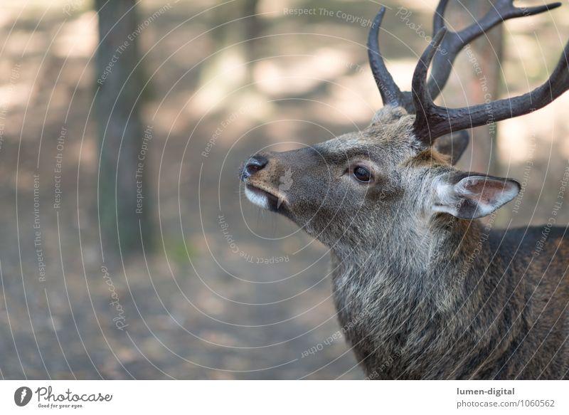 Beautiful Animal Forest Wild animal Posture Antlers Deer Dominant Fallow deer