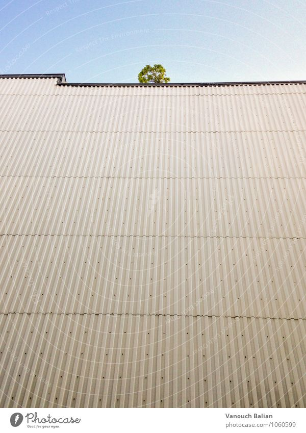 Tree on wall Foliage plant Downtown Berlin House (Residential Structure) Wall (barrier) Wall (building) Facade Sadness Wait Throw Threat Hideous Gloomy Town
