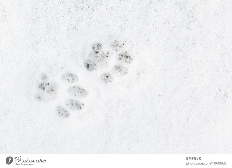 I know what you did last night..... Winter Weather Ice Frost Snow Animal Pet Cat Paw Tracks Tracking White Cold Curiosity Imprint Structures and shapes