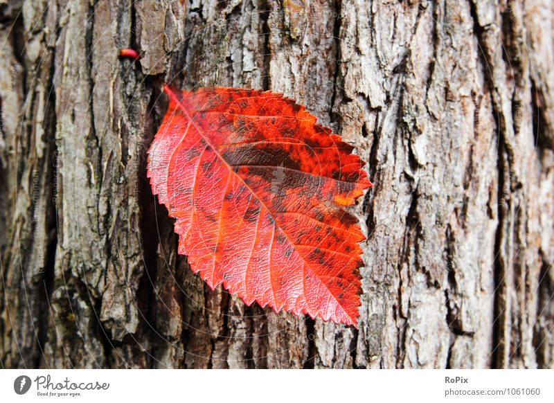 Nature Plant Tree Relaxation Red Leaf Calm Forest Environment Autumn Natural Garden Glittering Park Growth Esthetic