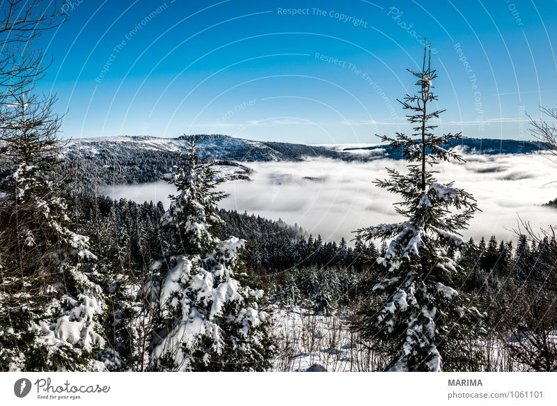 winter hike in the northern Black Forest on a sunny day Calm Tourism Winter Mountain Environment Nature Landscape Clouds Tree Hill Cold Gray White Wanderlust