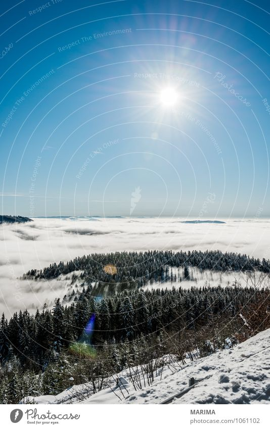 winter hike in the northern Black Forest on a sunny day Calm Tourism Sun Winter Mountain Environment Nature Landscape Clouds Tree Hill Cold Gray White
