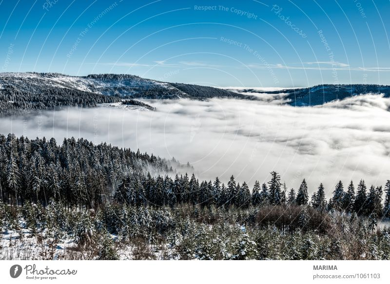 Nature White Tree Landscape Calm Clouds Winter Black Forest Cold Environment Mountain Gray Tourism Europe Hill