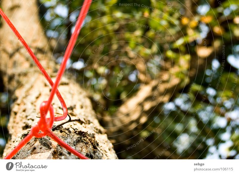 freestyle node Tree Leaf Green Red String Clothesline Summer Branch Knot Rope Tree trunk