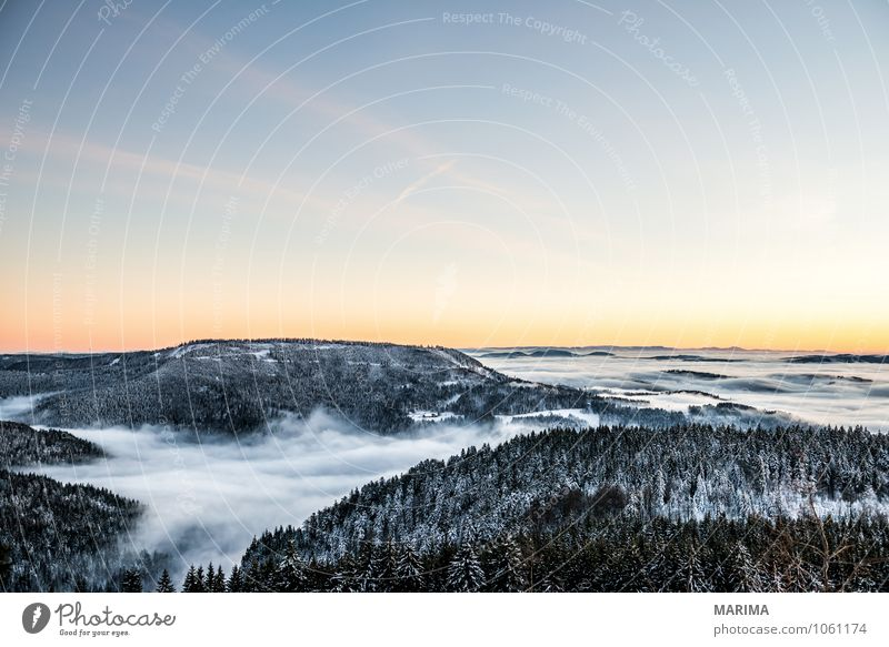 winter hike in the northern Black Forest on a sunny day Calm Tourism Winter Mountain Environment Nature Landscape Tree Hill Cold Gray White Wanderlust evening