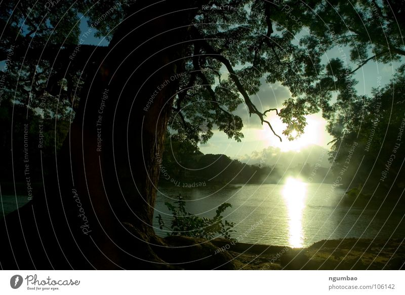 Nature Tree Green Sun Leaf Cold Dark Mountain Landscape Spring Sand Lake Earth Fog Painting and drawing (object) Candy