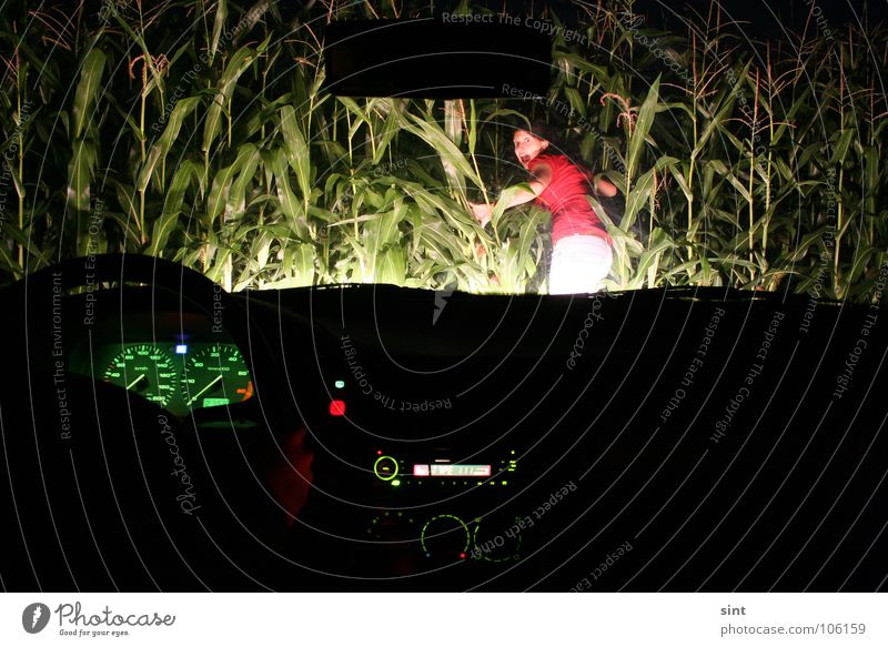 Woman Car Fear Transport Driving Lawn Hunting Radio (broadcasting) Panic Heat Maize Steering wheel Speedometer Maize field