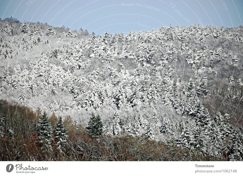 Nature Blue Plant Green White Landscape Joy Winter Forest Environment Emotions Snow Natural Gray Brown Ice