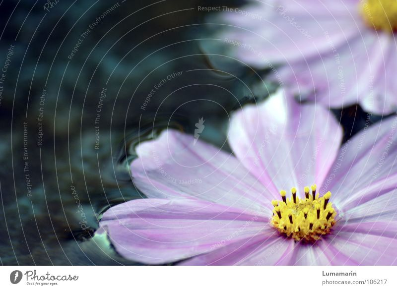 Old Water Blue White Beautiful Flower Summer Yellow Cold Life Autumn Gray Garden Blossom Rain Weather