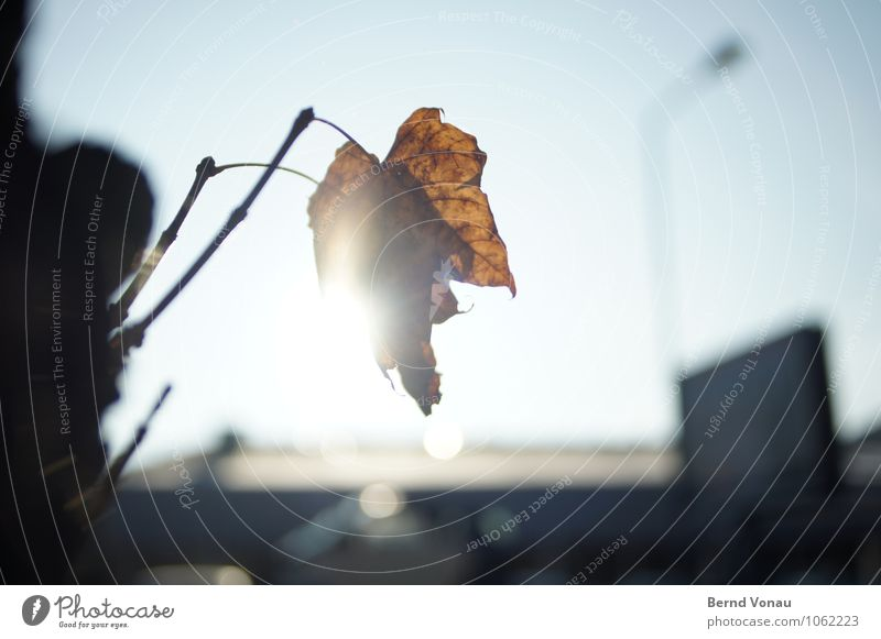 obituary Beautiful Sun Lamp Sky Autumn Warmth Tree Leaf Building Bright Blue Brown Death Autumn leaves Dazzle Individual Branch Lighting Rachis Transparent