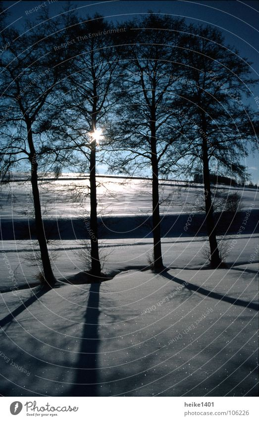 Sky Tree Sun Winter Loneliness Far-off places Dark Cold Snow Landscape Ice Threat Frost Frozen Beautiful weather Freeze