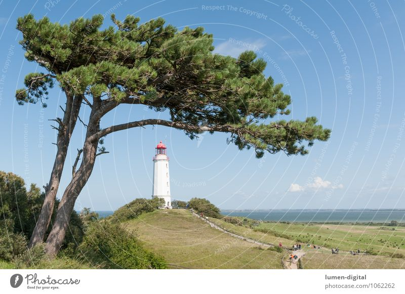 Pine with lighthouse on Hiddensee Nature Clouds Horizon Summer Beautiful weather Tree Coast Baltic Sea Tower Lighthouse Landmark Maritime Blue Navigation mark