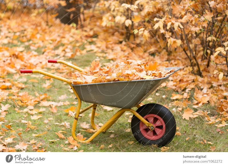 Wheelbarrow with leaves in autumn Garden Work and employment Gardening Autumn Bushes Leaf Meadow Cleaning Yellow Orderliness Environment
