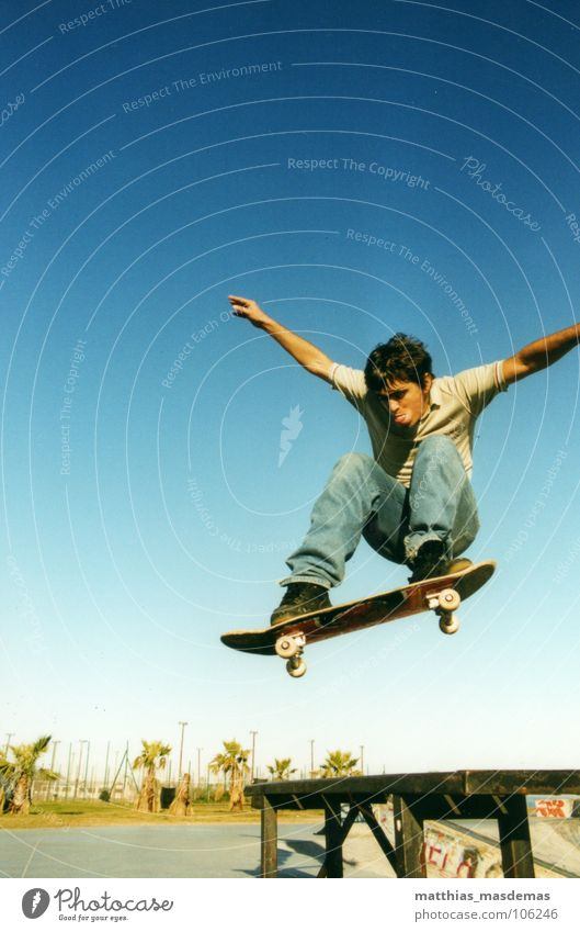 Joy Sports Movement Jump Horizon Contentment Arm Flying Speed Aviation Skateboarding Palm tree Dynamics Park Coil Blue sky