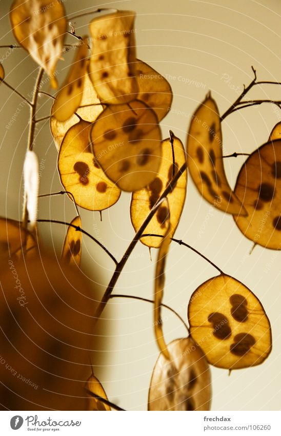 Leaf Yellow Life Wall (building) Lighting Round Decoration Thin Branch Dry Transparent Seed Visual spectacle Progress Sensitive Dried